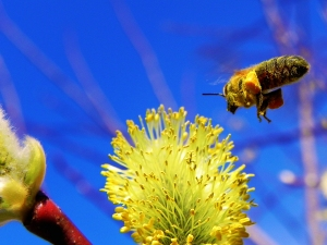 What's Buzzing in the Media This Week? Photo Courtesy of Artur. Above Promotions Company, Tampa, FL 2012.